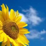 おすすめの夏用マスクの選び方と夏の紫外線・ウイルス対策